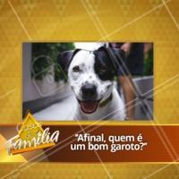 """Hoje em """"Casos de Família"""" 🤣🤣 #cachorro #ahazoupet #pet #casosdefamilia"""