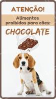 Sempre que você come um chocolate seu doguinho fica em cima querendo um pedaço? Muito cuidado! O chocolate é PROIBIDO para nossos peludos. 🍫O chocolate, principalmente o escuro, contém teobromina, uma substância que faz um grande estrago no sistema nervoso dos totós. Presente no cacau, a teobromina pode provocar crises alérgicas, aumento da pressão arterial, taquicardia, arritmia, tremores e convulsões. 😳  #pet #ahazoupet #cachorro #dog #chocolate