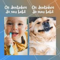 Esses dentinhos... 😍 #cachorro #pet #ahazoupet #engracado #petlovers