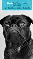 Fazendo banho e tosa 🛁 seu pet GANHA de brinde um corte de unhas e limpeza de ouvidos, super importante pra mantê-los saudáveis e felizes ❤️ Corre pra aproveitar!! #promoçao #ahazoupet #banhoetosa #petshop