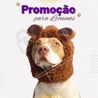 Essa promoção é especial para os papais e mamães de pet que são leoninos! Não vai perder, hein! 😉 #promocao #leonino #ahazoupet #signos #pet