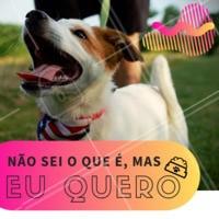 O pet de vocês também é assim? 😂😂🤦♀❤ #pet #ahazou #engraçado