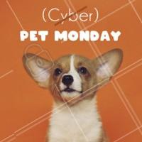 Cyber Monday? Por aqui nós celebramos a PET Monday, continuação da nossa Black Friday 🐾 Aproveite os descontos e promoções, fique de olho! #pet #ahazoupet #cybermonday #blackfriday