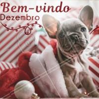 Chegou o mês mágico do Natal! E com ele muita esperança, muito amor e fé para o ano que vem... Que seja doce, Dezembro! 🎄🎅🏼🐾  #dezembro #ahazoupet #natal #papainoel #fimdeano