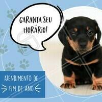 Fim de ano já está aí, então corre para garantir os atendimentos do seu pet até o fim de ano!🎅🏼 #pet #ahazoupet #veterinario #fimdeano