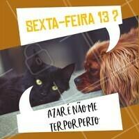 Quem concorda? Gatinho preto traz muita sorte sim e muito AMOR! ❤️ #pet #ahazoupet #sextafeira13 #sextou #sexta13