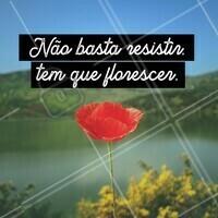 Floresça para que o mais bonito de você se mostre para o mundo! #ahazou #serfeliz