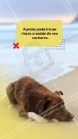 Na hora de passear com o seu cachorro evite levá-lo a praia, fatores que prejudicam a saúde do seu bichinho é do sol forte, água salgada entre outros. Então por isso tome esses cuidados! #praia #ahazoupet #pet