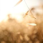 rosangela cruz